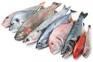 метаболизм рыба