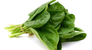 метаболизм шпинат