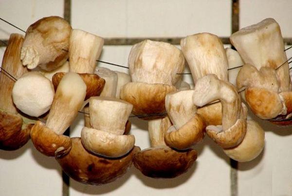 Сушка грибов как сушить грибы